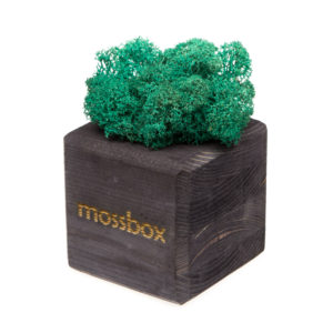 Композиция black moray cube