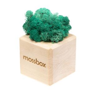 Композиция wooden moray cube