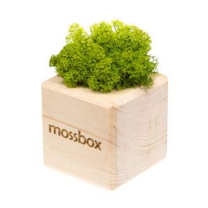 Композиция wooden green cube