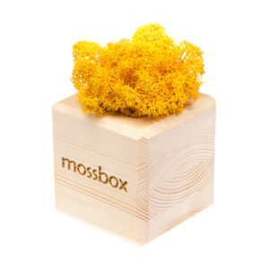 Композиция wooden yellow cube